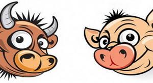حکایت گاو و خوک