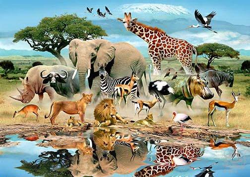 مطالب داغ: شگفتی های آفرینش در حیوانات