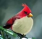 تصاویر گلها و پرندگان عجیب و زیبا