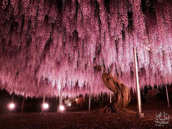 زیبا ترین درختان جهان