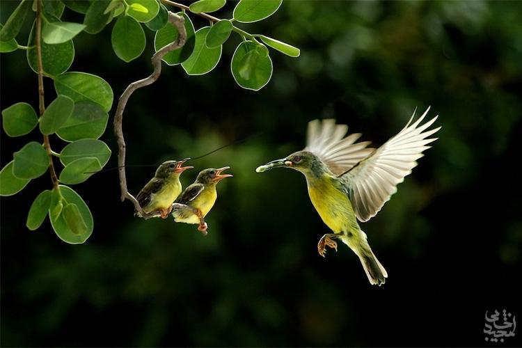 عاشقانهای از جنس پرندگان