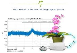 شنیدن درد دل گیاهان!
