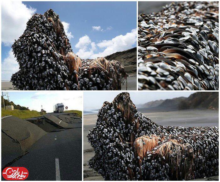 هیولای دریایی اسرارآمیز در نیوزلند
