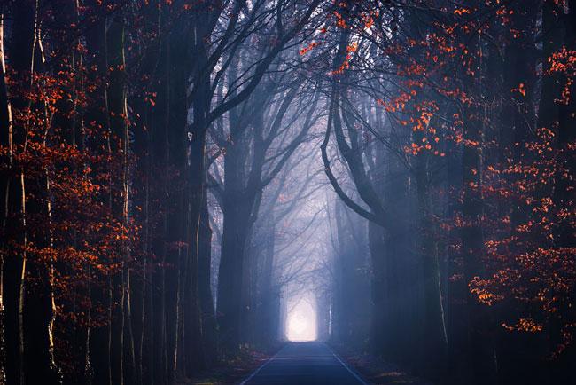 تصاویری زیبا از مناظر جادویی جنگل های هلند