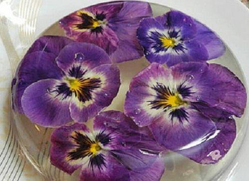 تصاویر ژله های گل دار زیبا