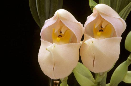 عجیب ترین و حیرت آور ترین گل های جهان