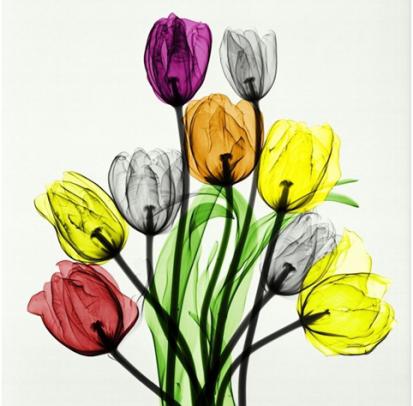 عکاسی از طبیعت با استفاده از اشعه ایکس