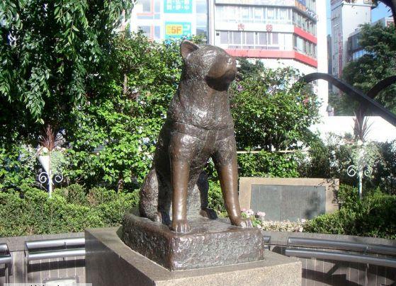 هاچیکو سگ ژاپنی