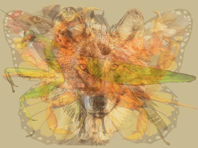 این حیوان نشاندهنده حالات روحی شماست
