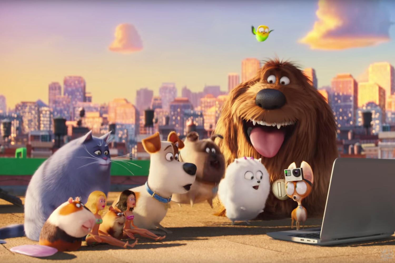 دانلود و تماشای انیمیشن زندگی پنهان حیوانات خانگی