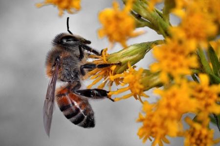 کشف اسرار مغز انسان با کمک زنبور عسل