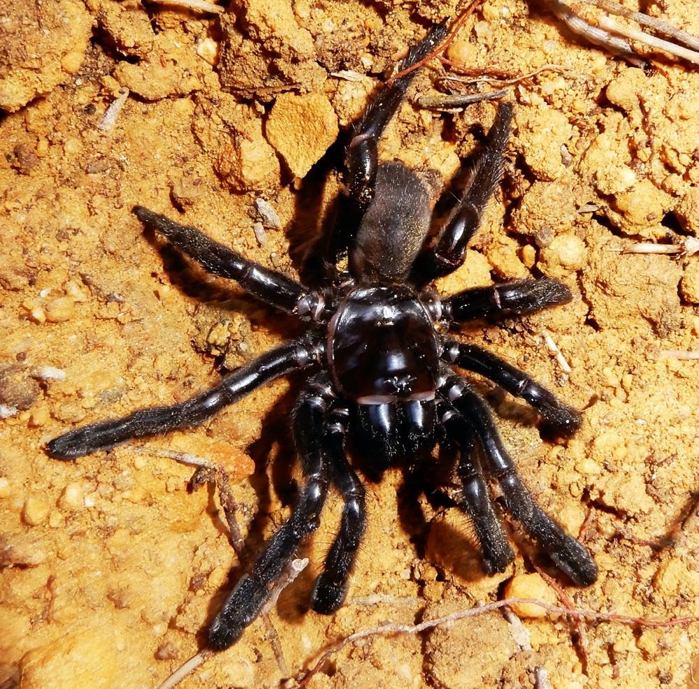 پایان زندگی پیرترین عنکبوت دنیا!