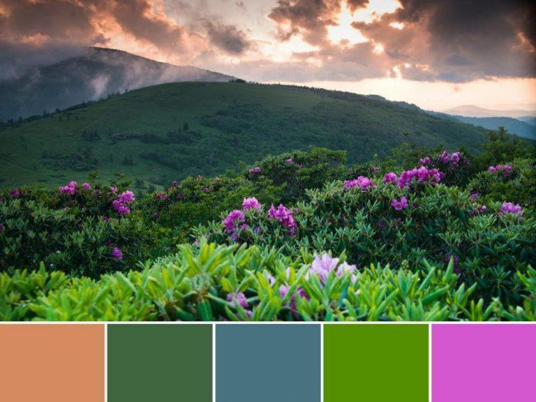 بهترین رنگهای دکوراسیون داخلی با الهام از دل طبیعت