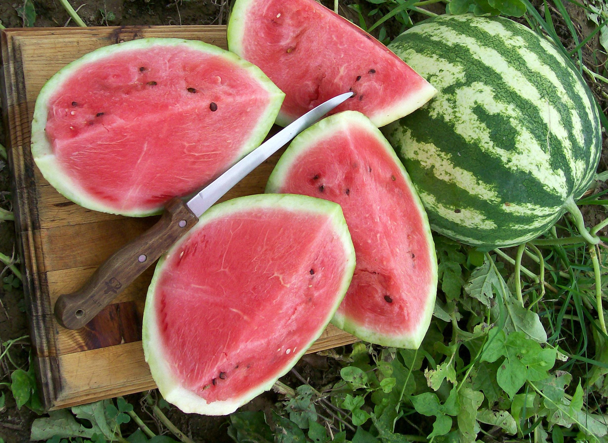 لم یک هندوانه شیرین و نگهداری طولانیمدت آن!
