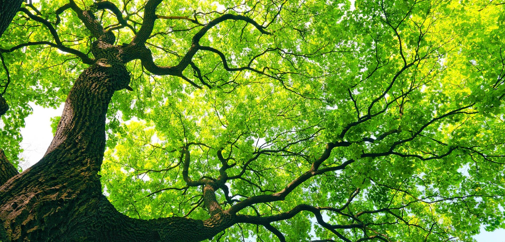 درختان هم ژست و ضربان قلب دارند!