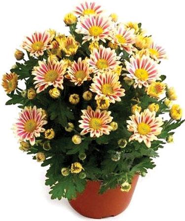 7 گیاهی که باید در خانه تان باشد