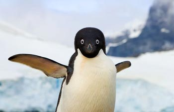 چرا پنگوئنها نمیتوانند پرواز کنند؟