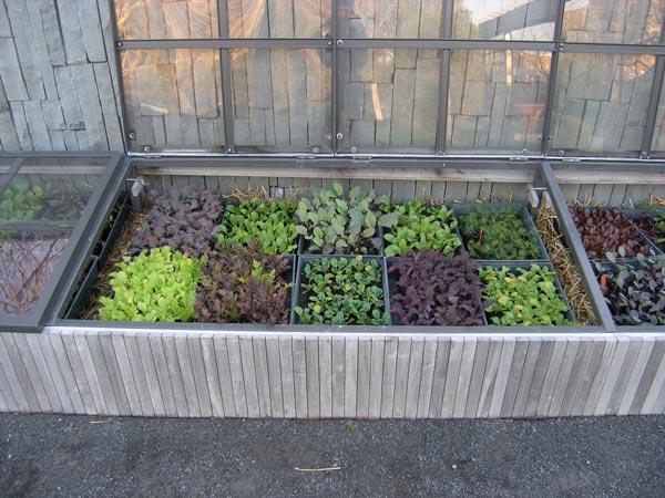 قاب زمستانی برای کاشت سبزیجات در زمستان