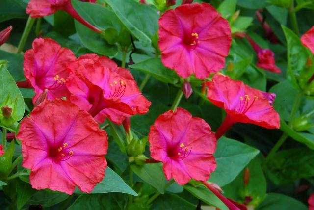 گل و گیاهان دفعکننده حشرات