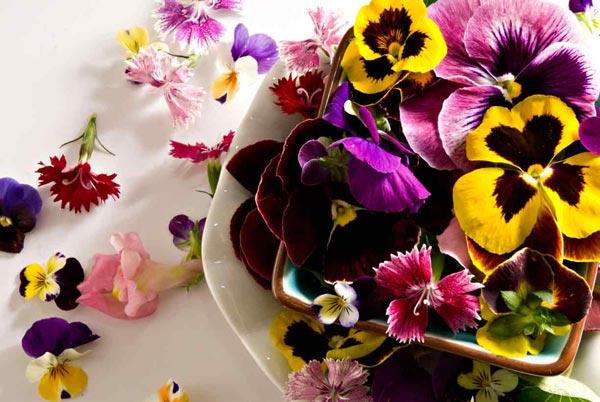 آشنایی با گلهای خوراکی