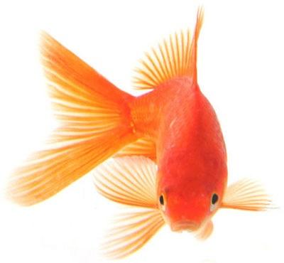13 نکته نگهداری از ماهی عید