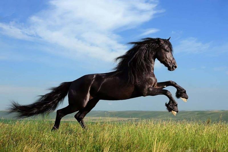 انواع نژاد اسب در کشور ایران کدامند؟ (قسمت 1)