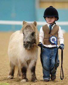 آموزش زین و دهنه کردن اسب و پیاده  و سوار شدن