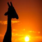 طلوع خورشید در قلمرو حیوانات