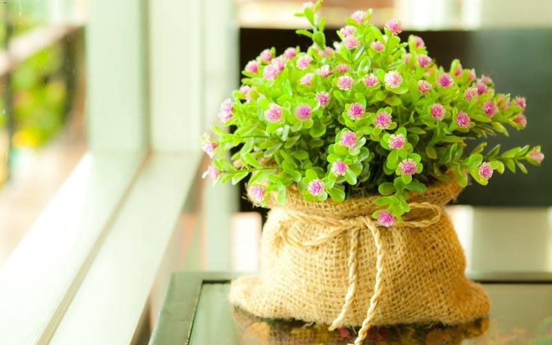 اگر افسرده اید به گل و گیاه نگاه کنید