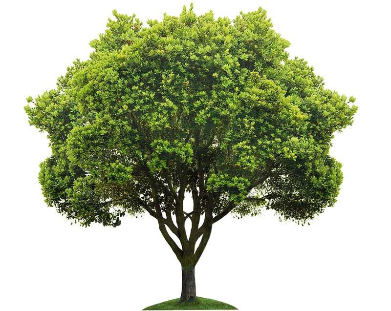 رابطه جالب شخصیت افراد با نقاشی کردن درخت
