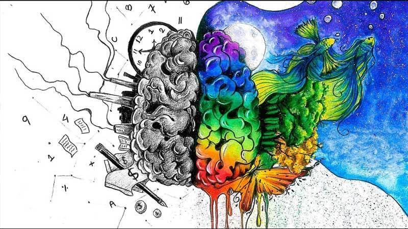 کدام نیم کره مغزتان فعال تر است؟
