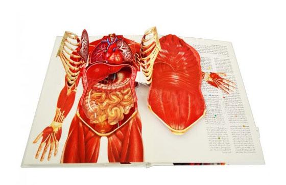 شگفتی های بدن شما