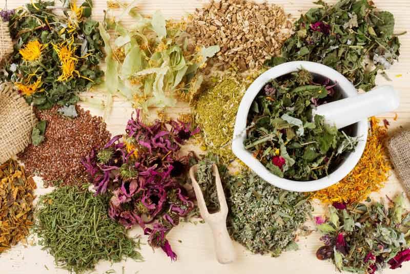 گیاهانی که به درمان ریزش مو کمک می کنند