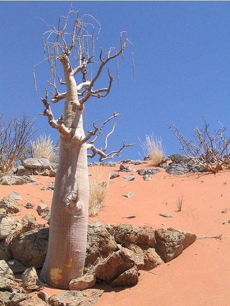 درختی که آب را تصفیه می کند