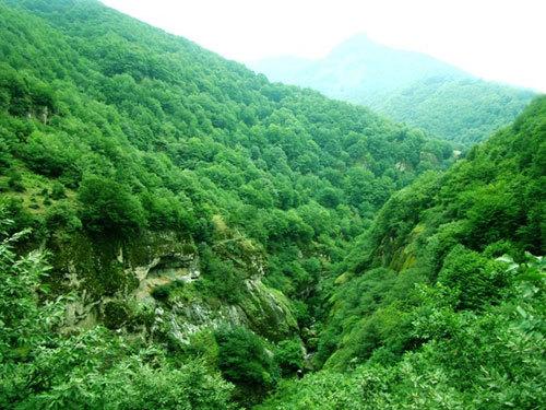 زیبایی های جنگل فندقلو