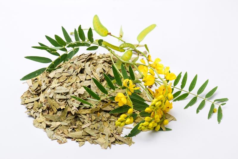 سنا گیاهی برای لاغری و درمان یبوست