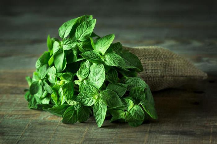 پنج گیاه دارویی برای جلوگیری از خشکی پوست