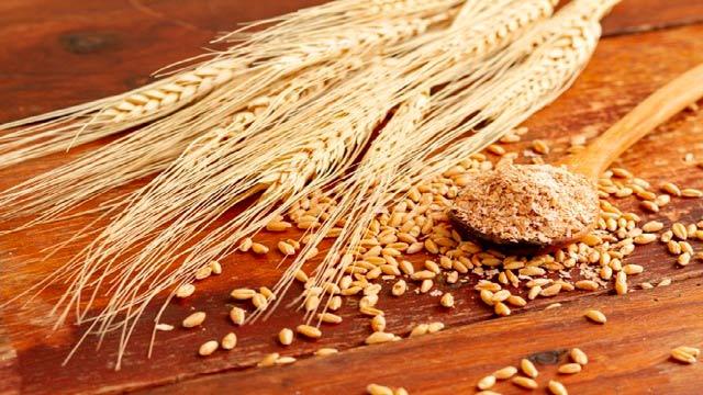 گندم و خواص آن