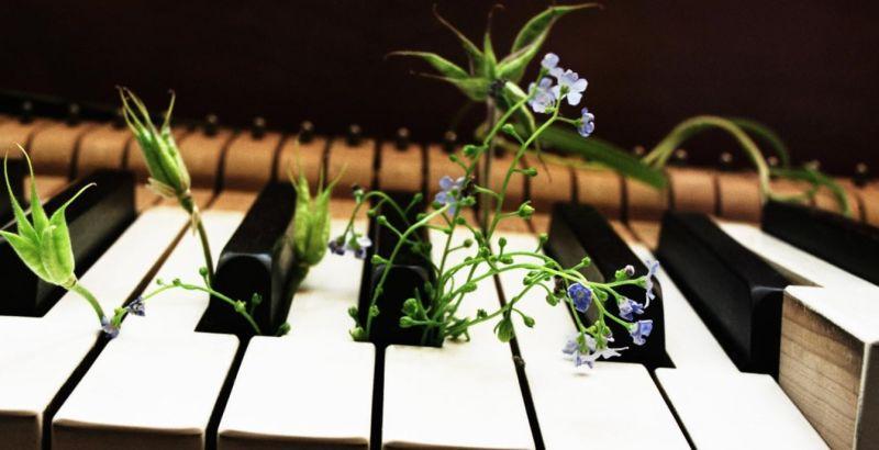 تأثیر موسیقی و رشد گیاهان