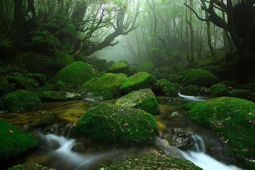 حمام جنگل